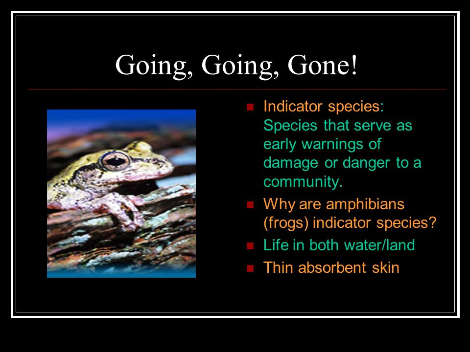 Going, Going, Gone! Indicator species: Species that serve as early warnings of damage or danger to a community. Why are amphibians (frogs) indicator s