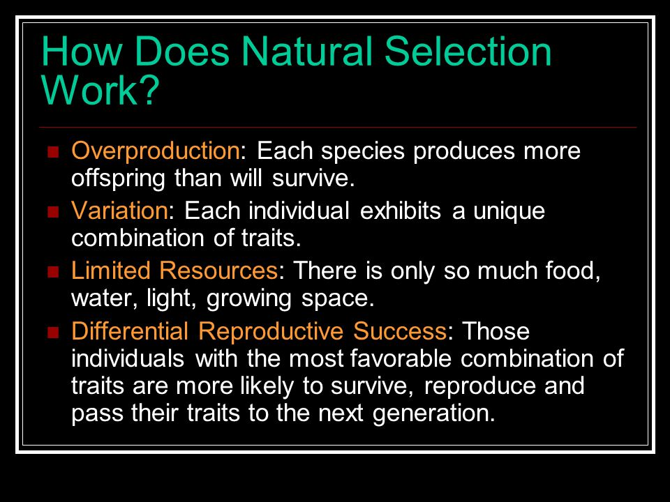 How Does Natural Selection Work? Overproduction: Each species produces more offspring than will survive. Variation: Each individual exhibits a unique