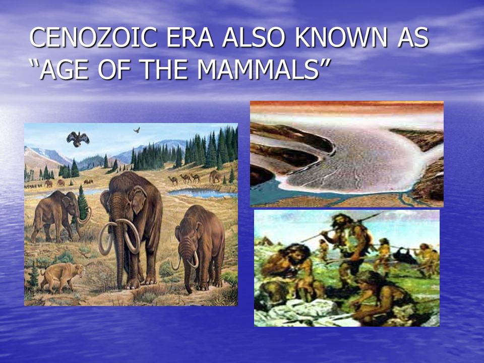 CENOZOIC ERA ALSO KNOWN AS AGE OF THE MAMMALS
