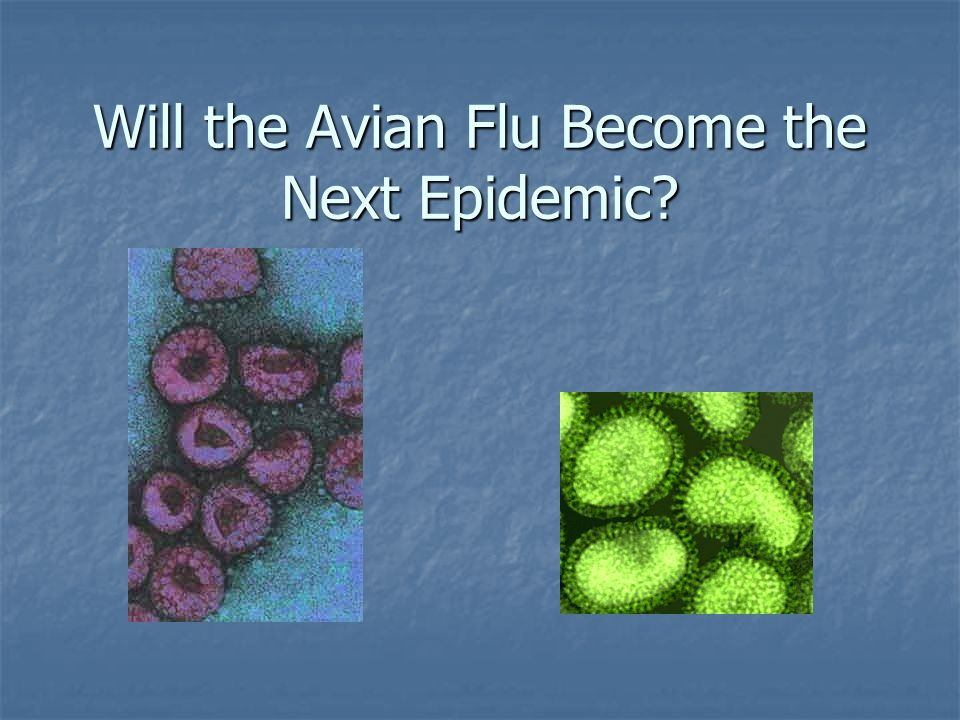 Will the Avian Flu Become the Next Epidemic?