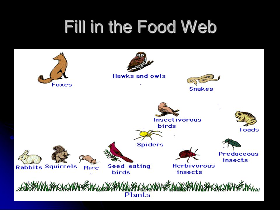 Fill in the Food Web