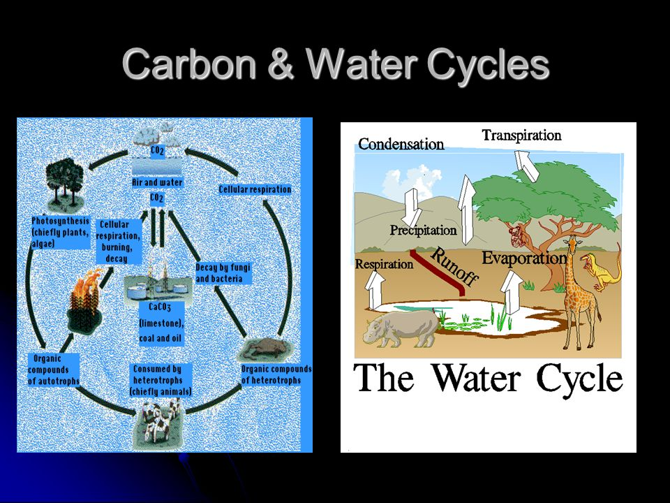 Carbon & Water Cycles