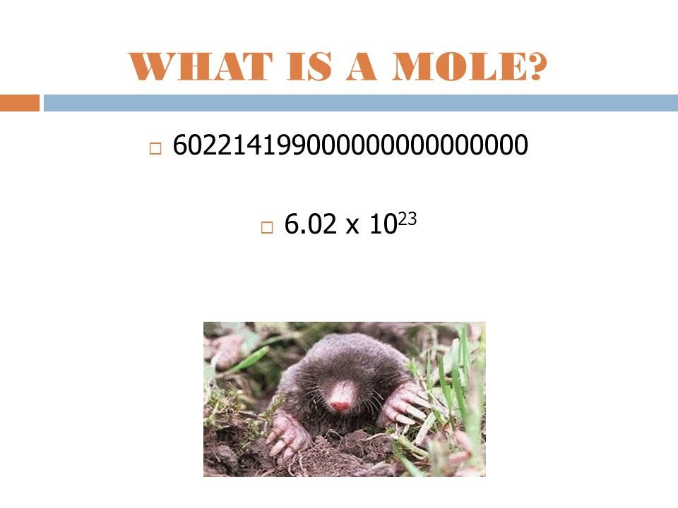 WHAT IS A MOLE? 602214199000000000000000 6.02 x 10 23