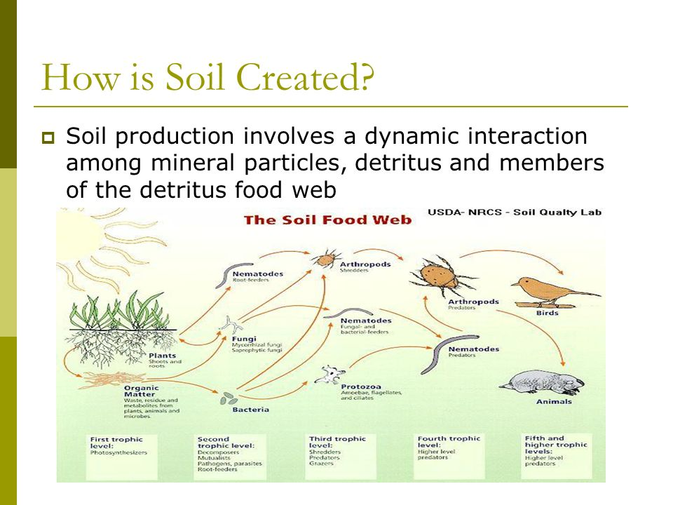 How is Soil Created? Soil production involves a dynamic interaction among mineral particles, detritus and members of the detritus food web