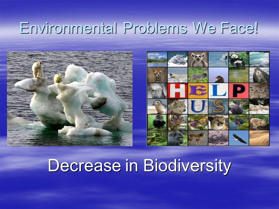 Environmental Problems We Face! Decrease in Biodiversity