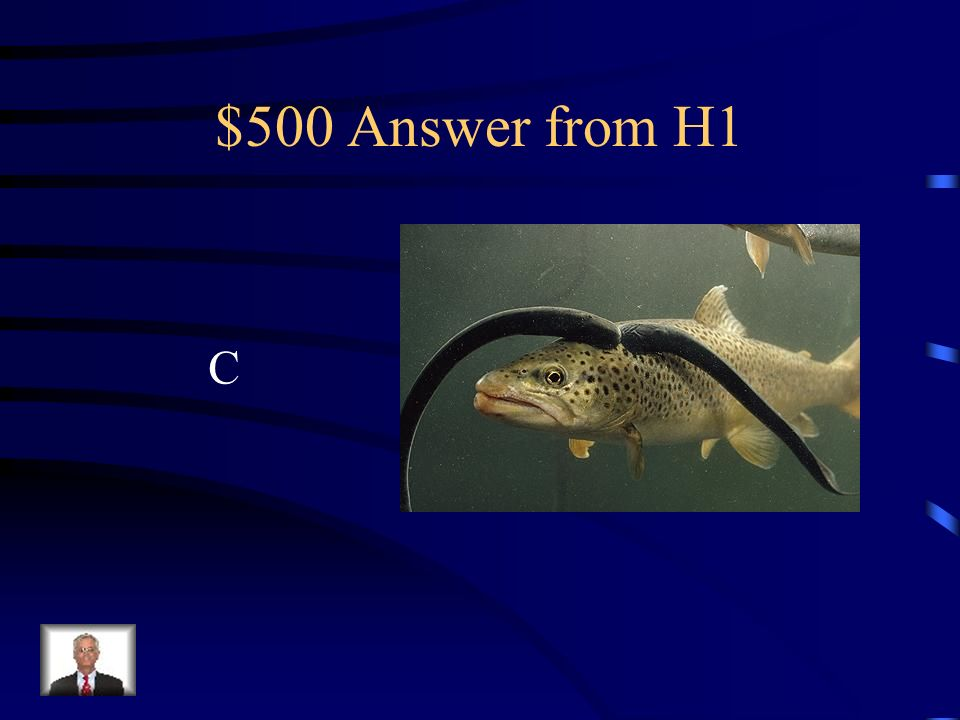 $500 Question from H1 The sea lamprey is an exotic species in the Great Lakes, why is it so damaginf to other fish.
