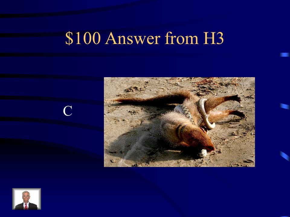 $100 Question from H3 The mongoose was first introduced in which state? a.New Jersey b.Califronia c.Hawaii