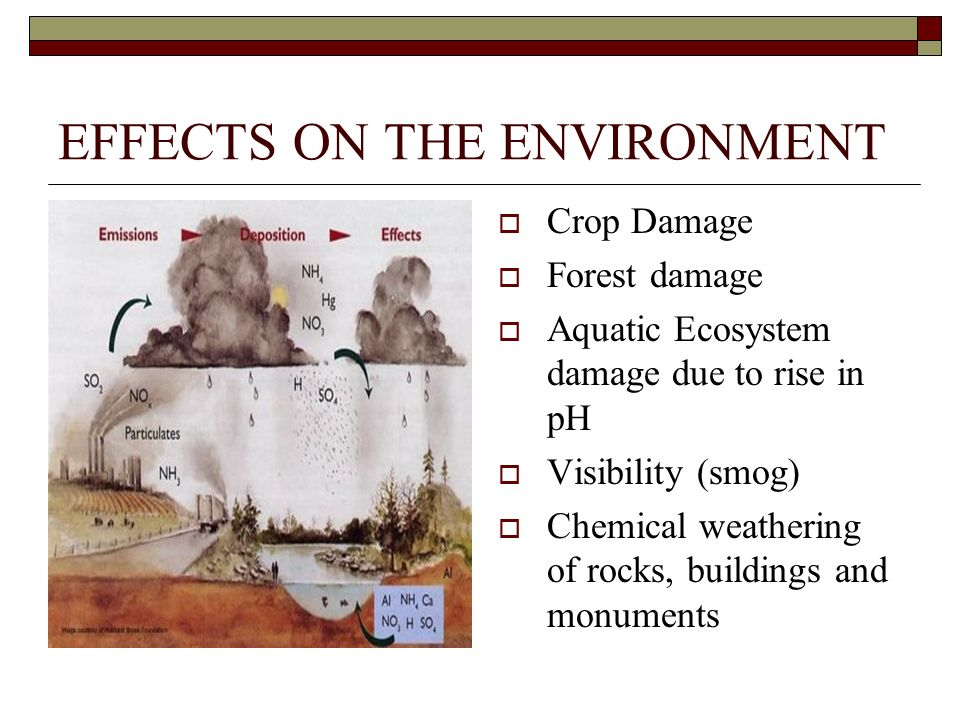 EFFECTS ON THE ENVIRONMENT Crop Damage Forest damage Aquatic Ecosystem damage due to rise in pH Visibility (smog) Chemical weathering of rocks, buildings and monuments
