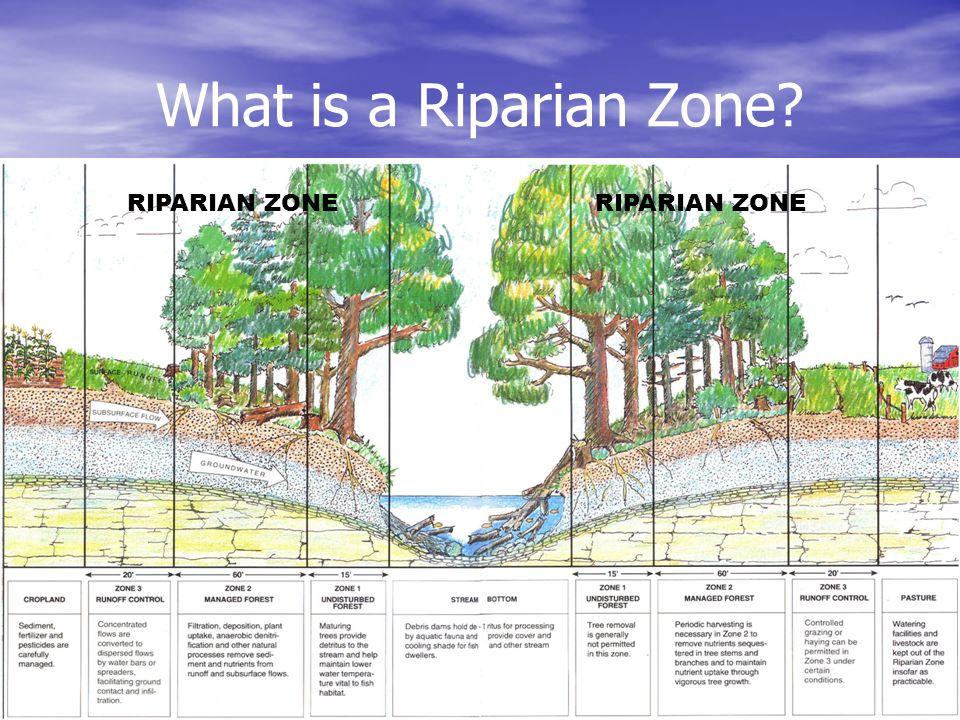 What is a Riparian Zone? RIPARIAN ZONE