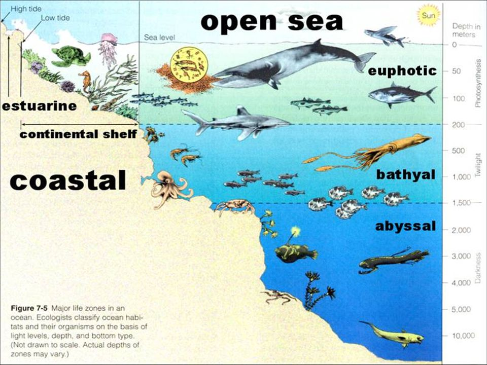What impact have humans had on marine ecosystems.