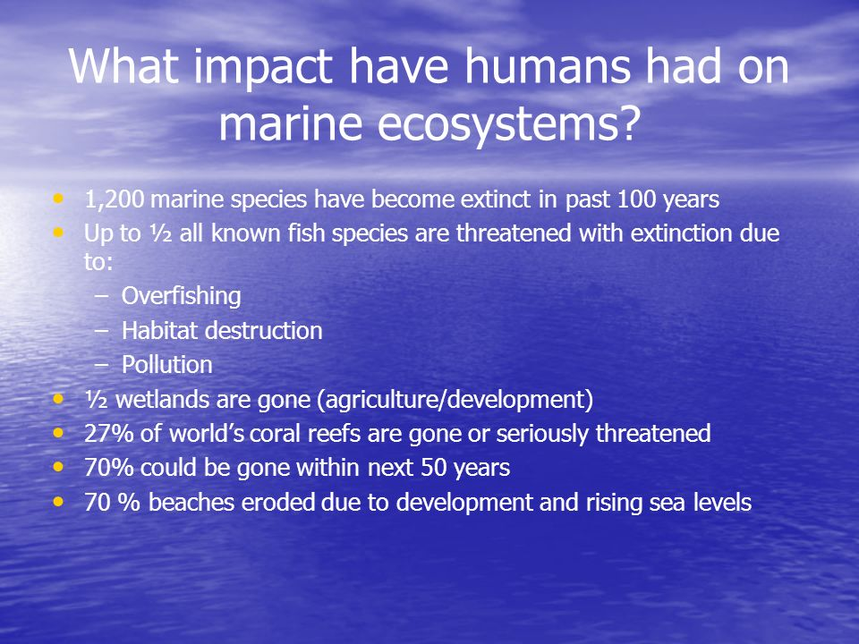 What services do marine ecosystems provide us with.
