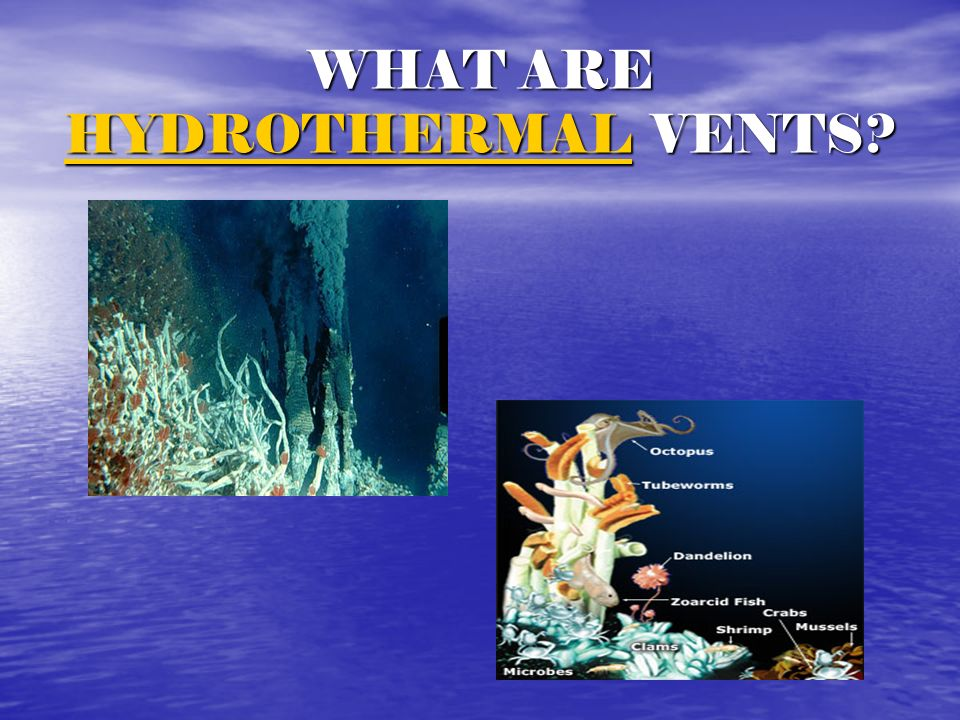 WHAT ARE HYDROTHERMAL VENTS? HYDROTHERMAL