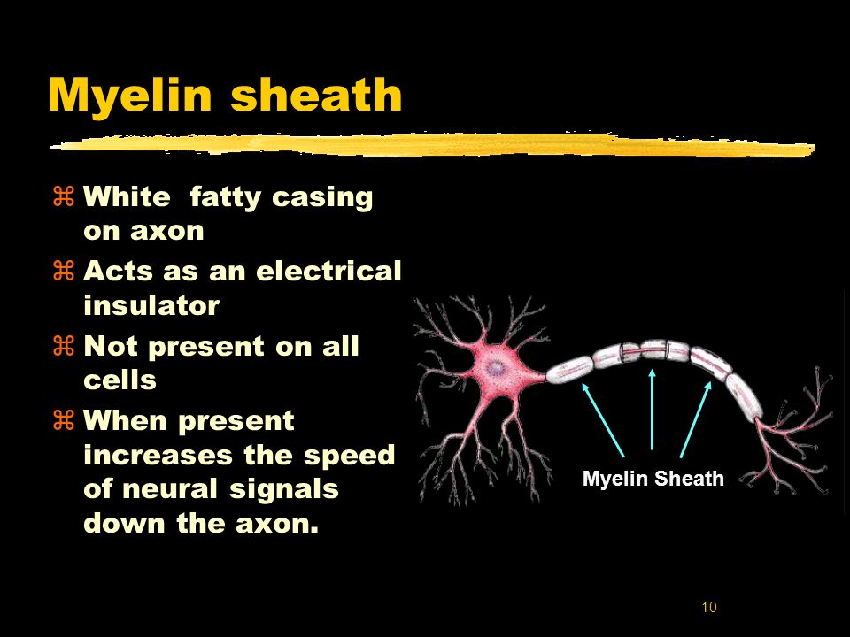 10 Myelin sheath zWhite fatty casing on axon zActs as an electrical insulator zNot present on all cells zWhen present increases the speed of neural si