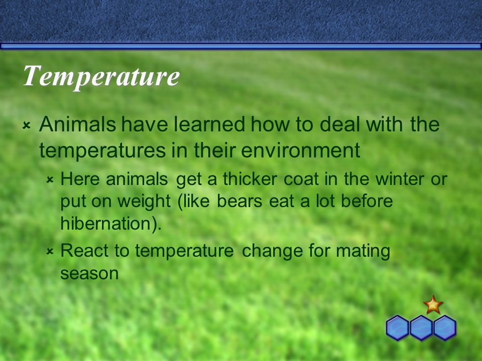 Temperature Animals have learned how to deal with the temperatures in their environment Here animals get a thicker coat in the winter or put on weight (like bears eat a lot before hibernation).