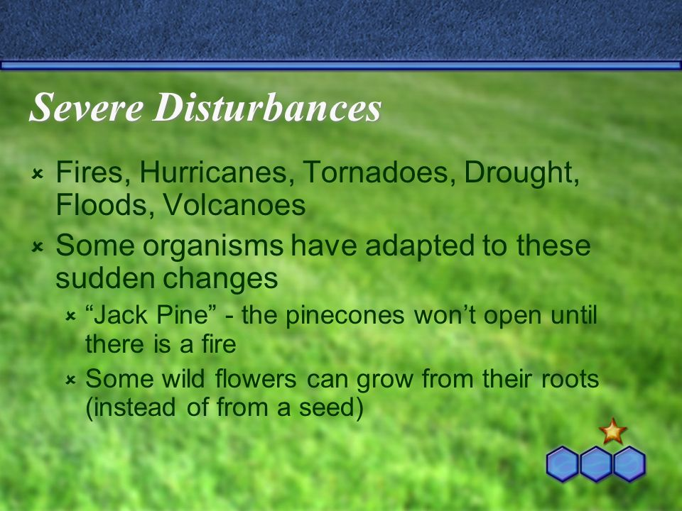 Severe Disturbances Fires, Hurricanes, Tornadoes, Drought, Floods, Volcanoes Some organisms have adapted to these sudden changes Jack Pine - the pinec
