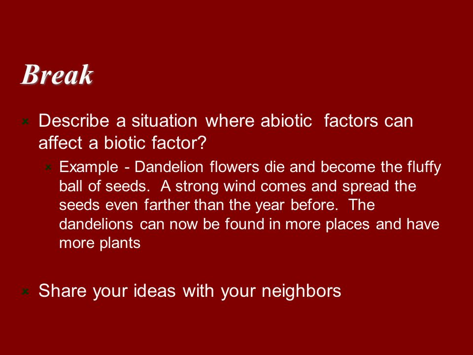 Break Describe a situation where abiotic factors can affect a biotic factor? Example - Dandelion flowers die and become the fluffy ball of seeds. A st