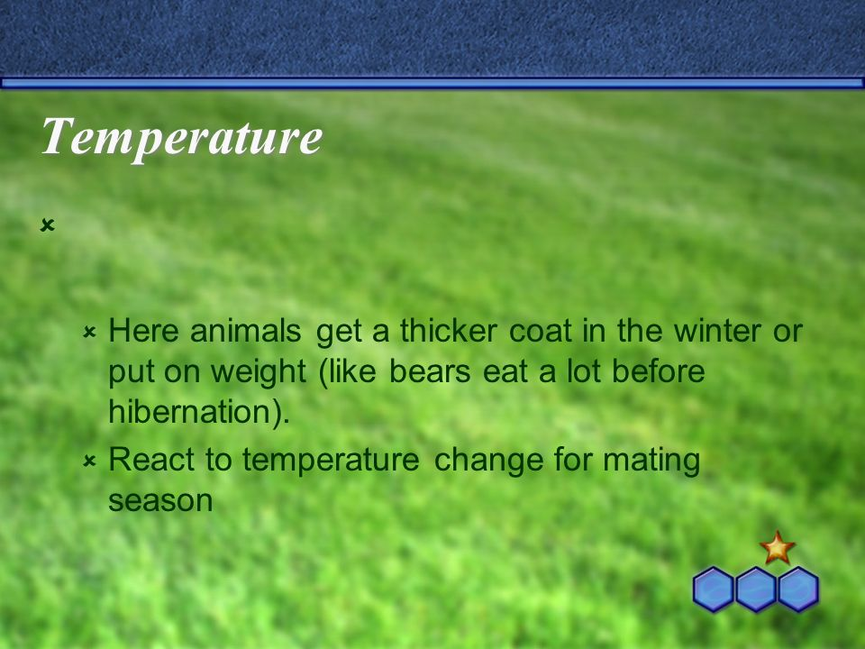 Temperature Here animals get a thicker coat in the winter or put on weight (like bears eat a lot before hibernation). React to temperature change for