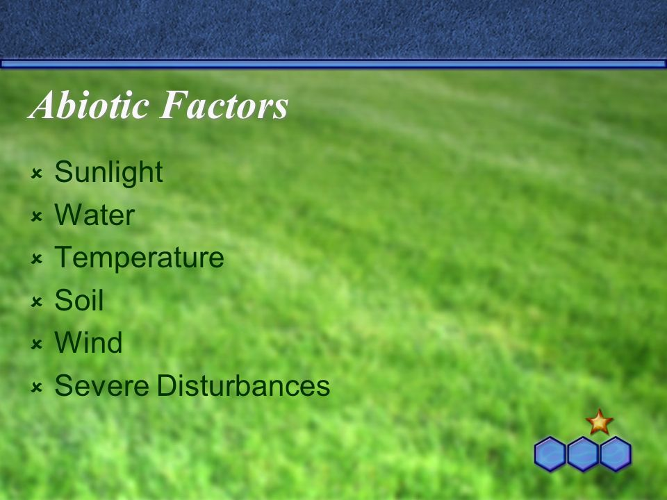 Abiotic Factors Sunlight Water Temperature Soil Wind Severe Disturbances