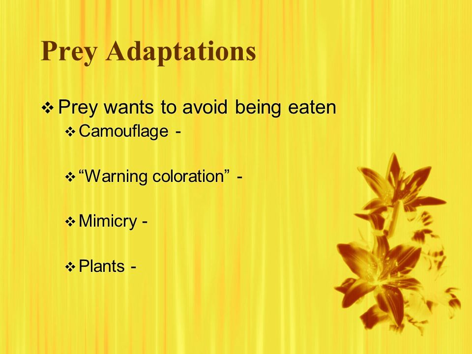 Prey Adaptations Prey wants to avoid being eaten Camouflage - Warning coloration - Mimicry - Plants - Prey wants to avoid being eaten Camouflage - War