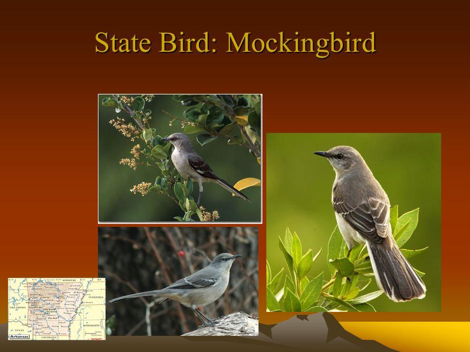 State Bird: Mockingbird