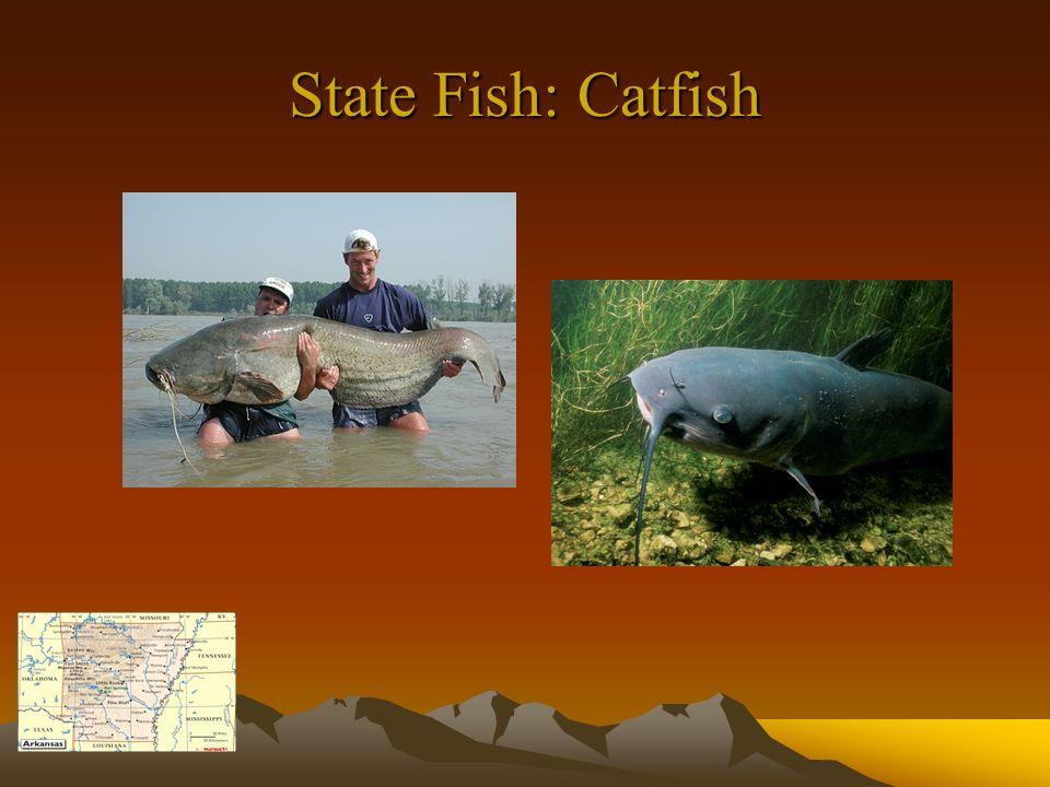 State Fish: Catfish