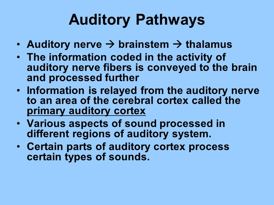 Auditory Pathways Auditory nerve brainstem thalamus The information coded in the activity of auditory nerve fibers is conveyed to the brain and proces