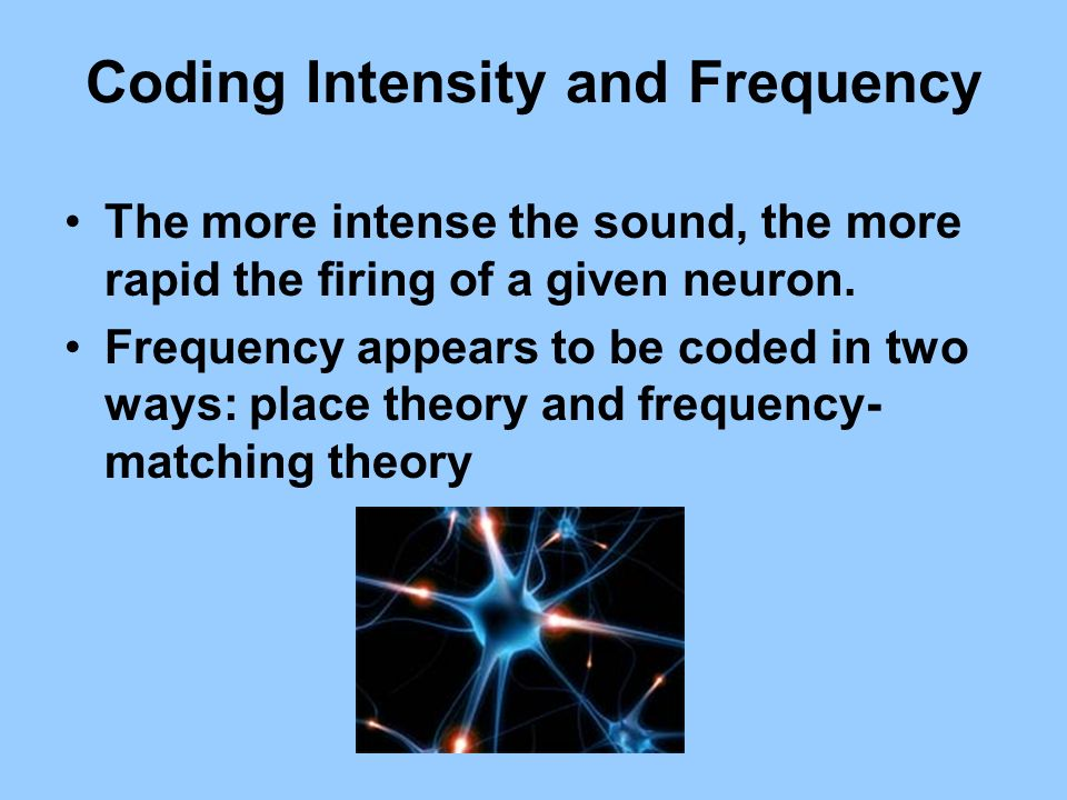 Coding Intensity and Frequency The more intense the sound, the more rapid the firing of a given neuron. Frequency appears to be coded in two ways: pla