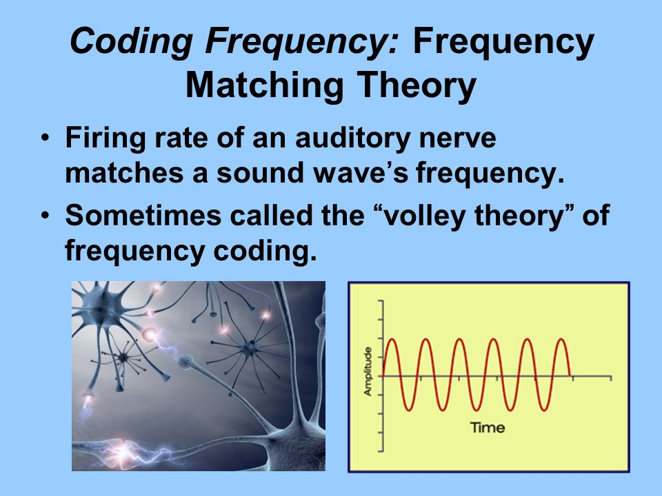 Coding Frequency: Frequency Matching Theory Firing rate of an auditory nerve matches a sound waves frequency. Sometimes called the volley theory of fr