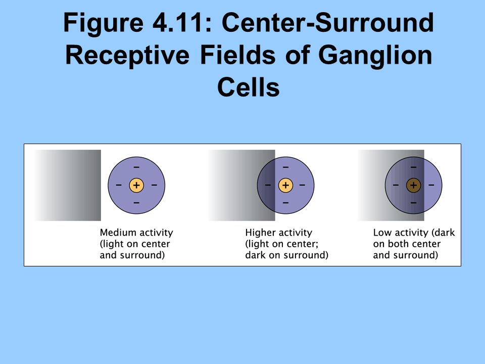 Figure 4.11: Center-Surround Receptive Fields of Ganglion Cells