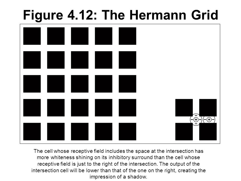 Figure 4.12: The Hermann Grid The cell whose receptive field includes the space at the intersection has more whiteness shining on its inhibitory surro