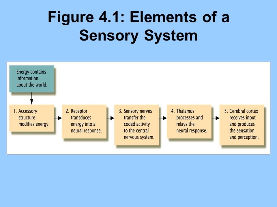 Figure 4.1: Elements of a Sensory System
