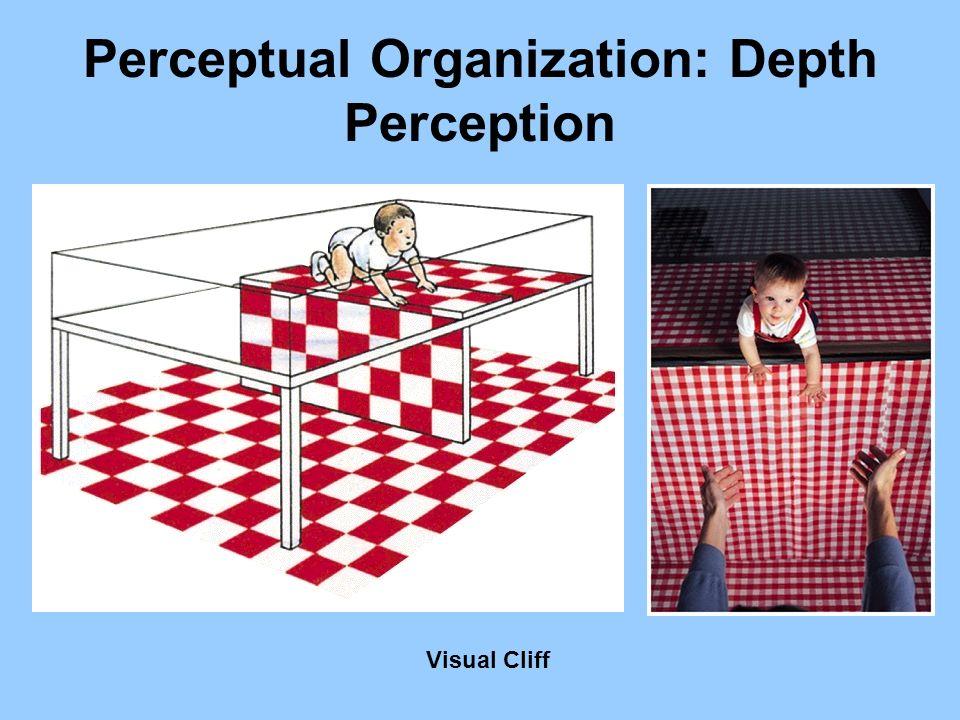 Perceptual Organization: Depth Perception Visual Cliff