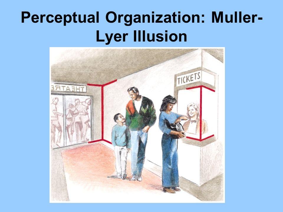Perceptual Organization: Muller- Lyer Illusion