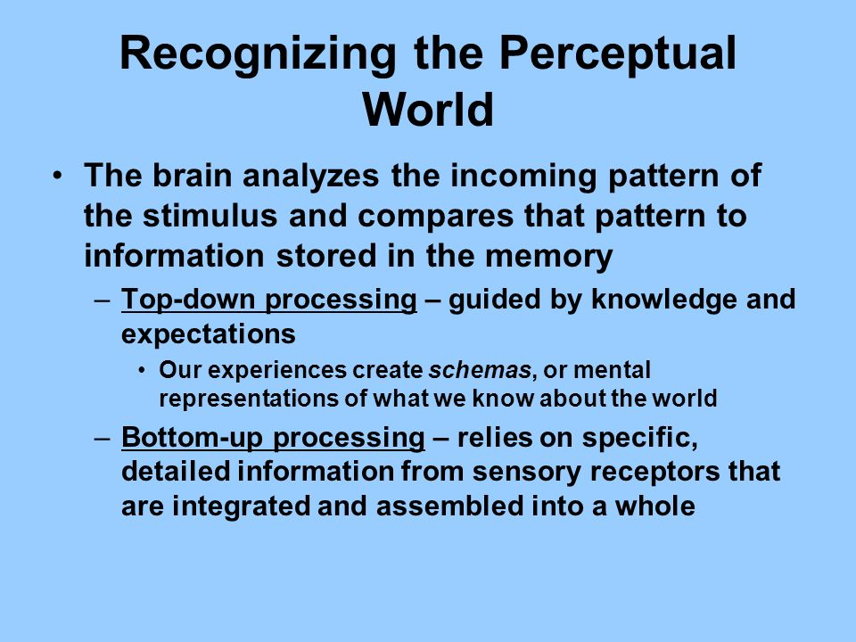 Recognizing the Perceptual World The brain analyzes the incoming pattern of the stimulus and compares that pattern to information stored in the memory