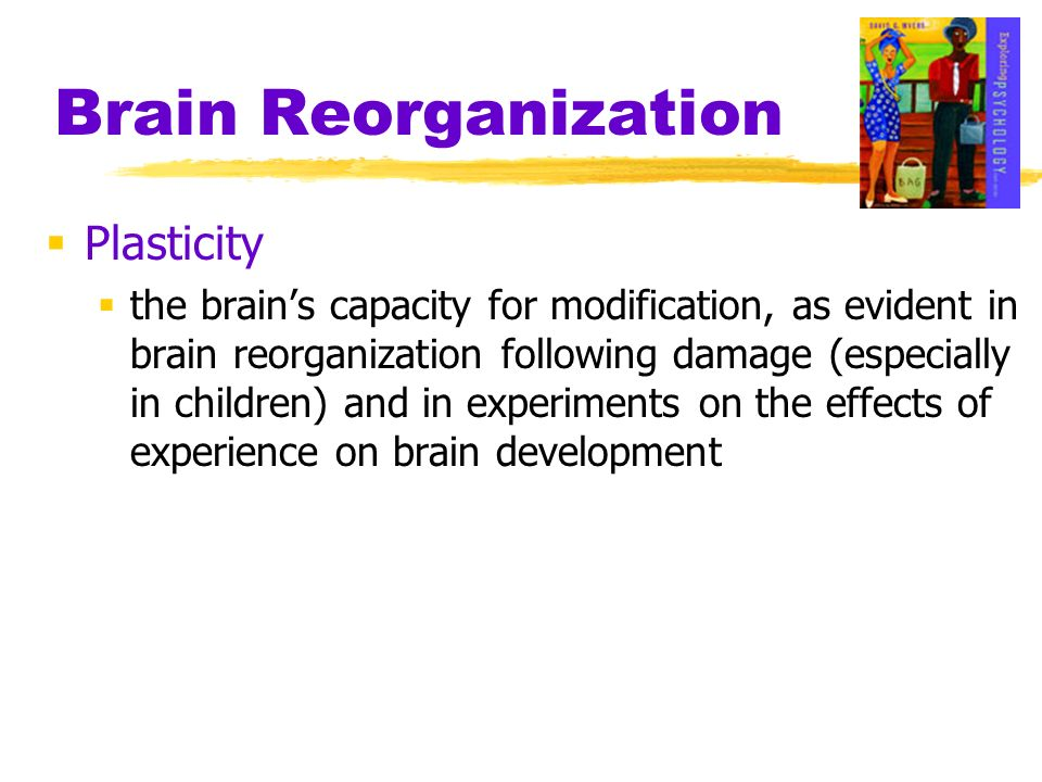 Brain Reorganization Plasticity the brains capacity for modification, as evident in brain reorganization following damage (especially in children) and