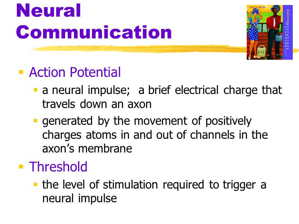 Action Potential a neural impulse; a brief electrical charge that travels down an axon generated by the movement of positively charges atoms in and ou