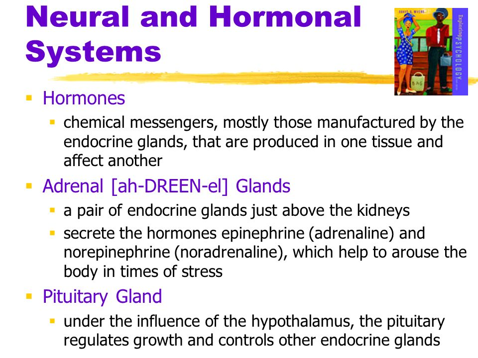 Neural and Hormonal Systems Hormones chemical messengers, mostly those manufactured by the endocrine glands, that are produced in one tissue and affec