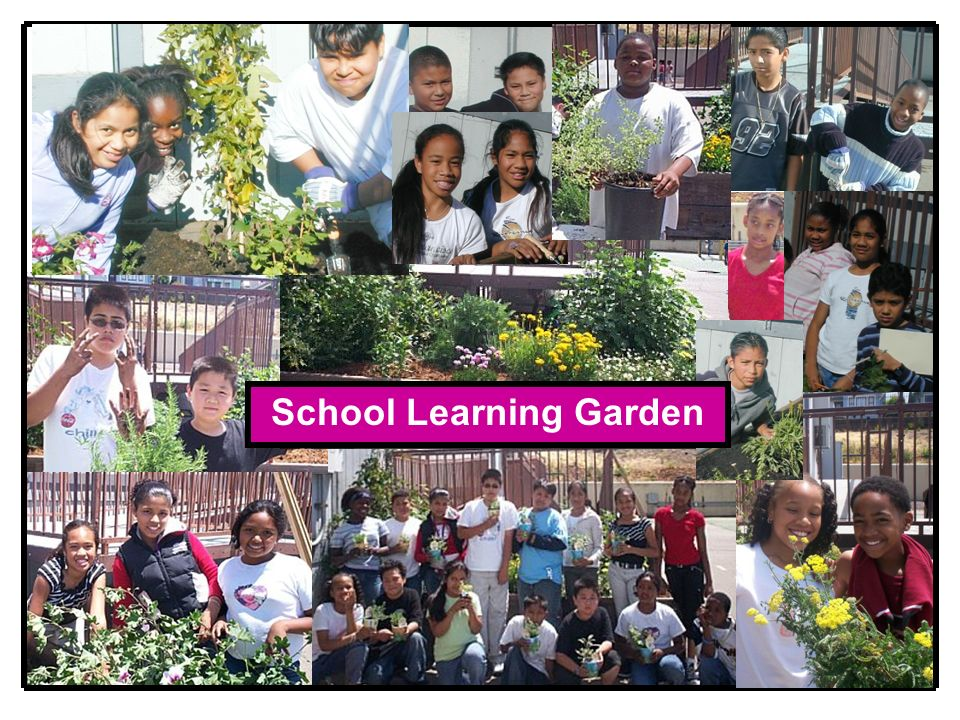 School Learning Garden