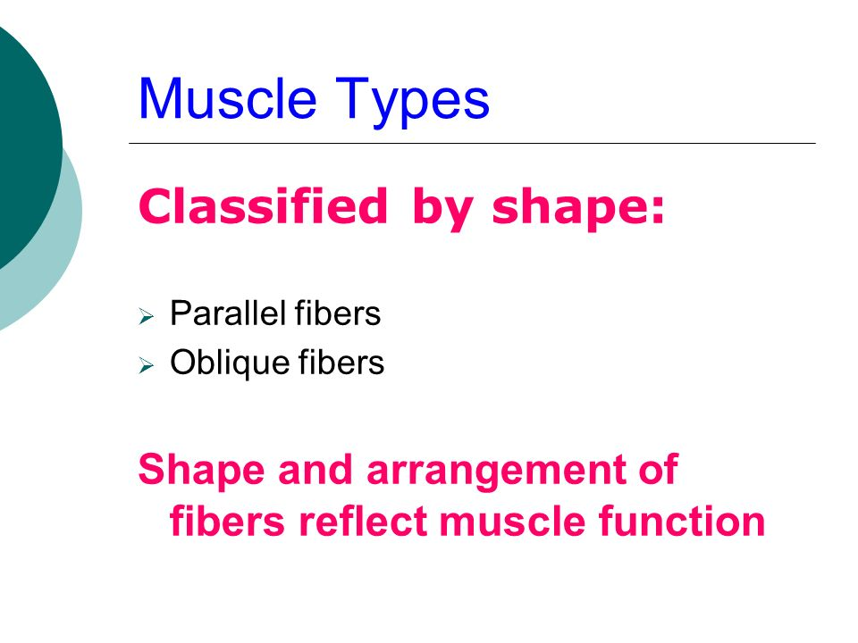 Muscle Types Classified by shape: Parallel fibers Oblique fibers Shape and arrangement of fibers reflect muscle function