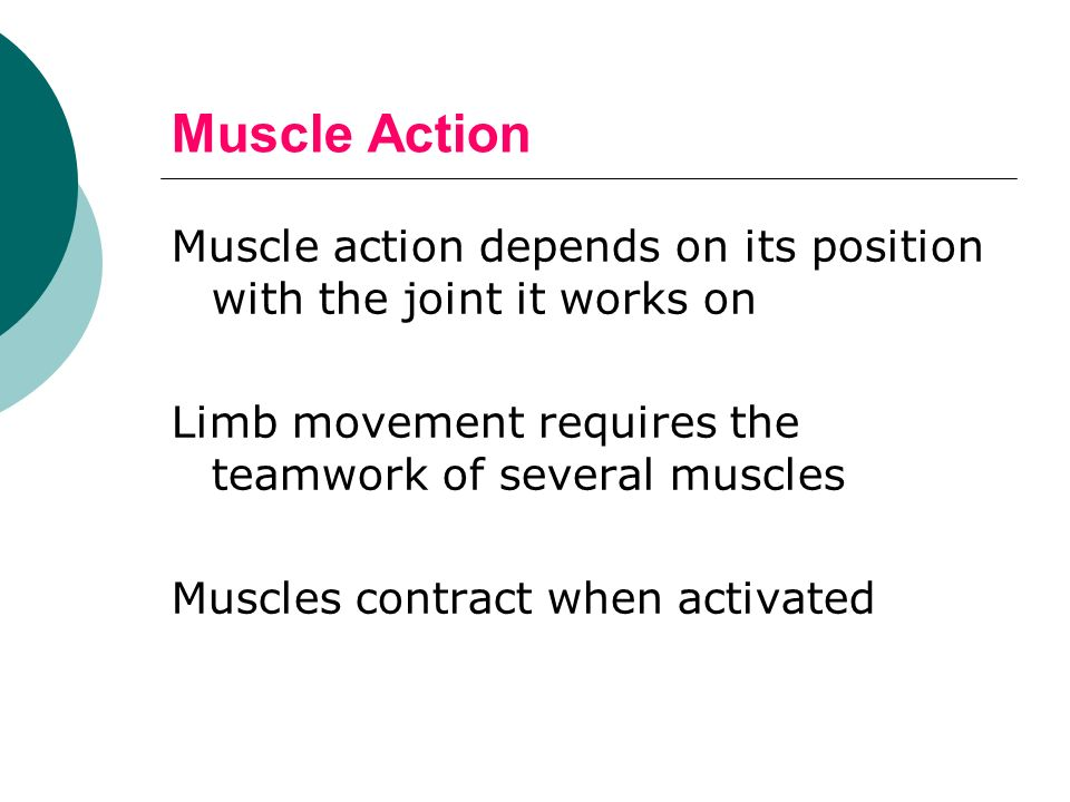 Muscle Action Muscle action depends on its position with the joint it works on Limb movement requires the teamwork of several muscles Muscles contract