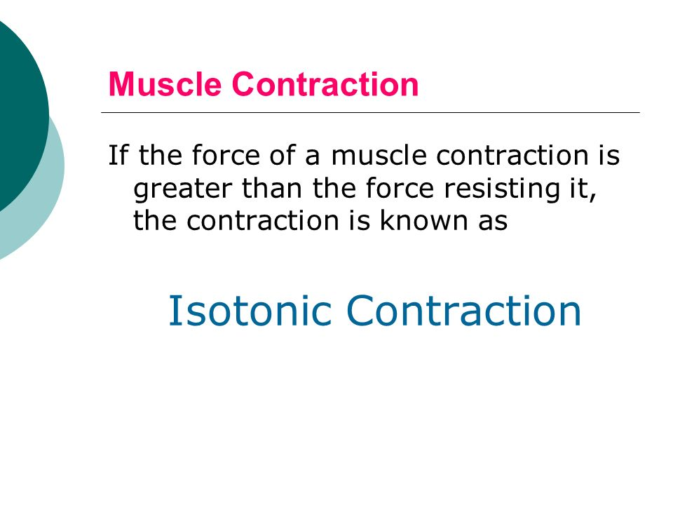 muscle contraction continued… If resistance to contraction is equal to the force, the muscle will not contract, known as: Isometric Contraction