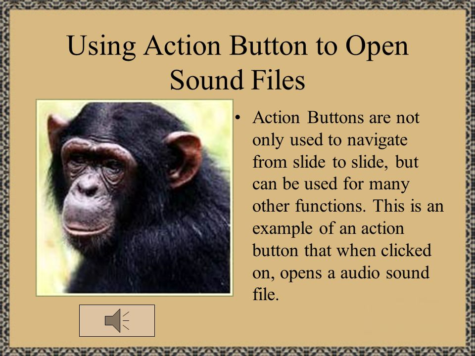 Action Button Options Custom Previous Slide Return Home Next Slide Document Help Beginning Slide Sound Information End Slide Movie There are many diff