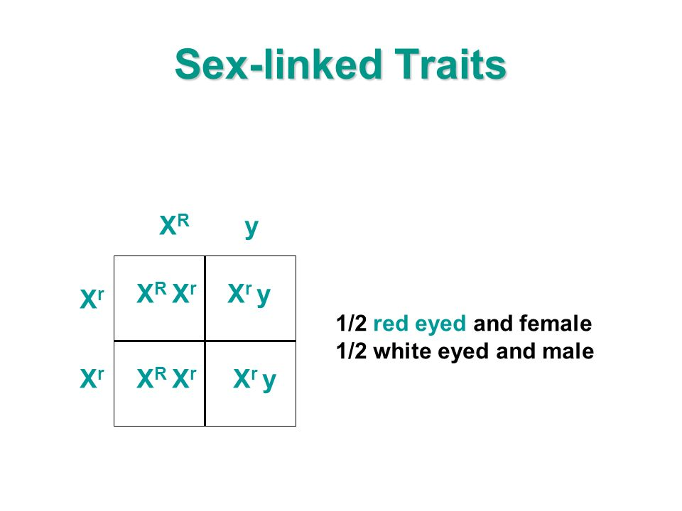 Sex-linked Traits X R X r X r y 1/2 red eyed and female 1/2 white eyed and male XrXr XRXR y XrXr