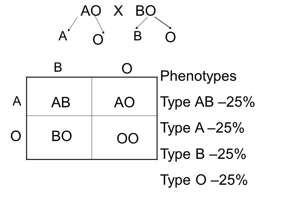 AO X BO A B O A O B O O ABAO OO BO Phenotypes Type AB –25% Type A –25% Type B –25% Type O –25%