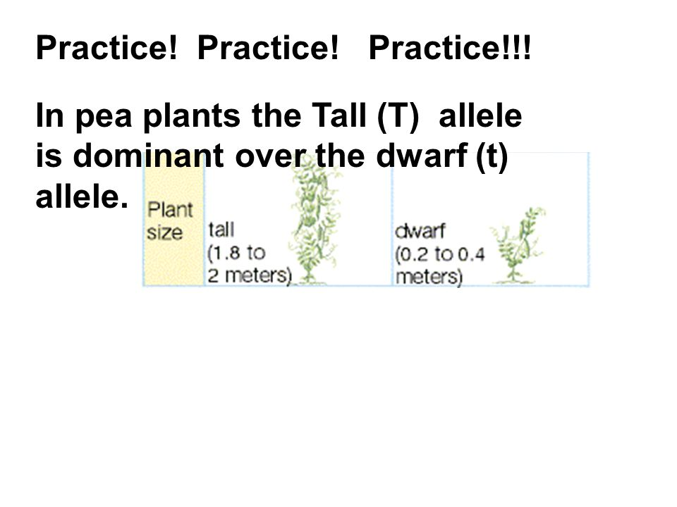Practice! Practice! Practice!!! In pea plants the Tall (T) allele is dominant over the dwarf (t) allele.