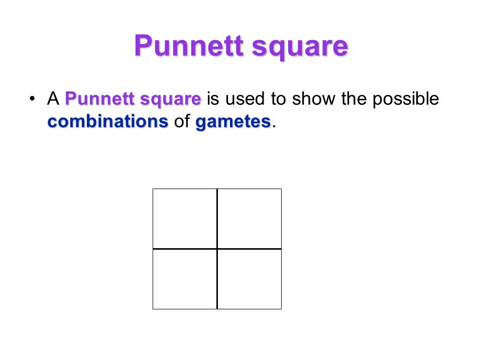 Punnett square Punnett square combinationsgametesA Punnett square is used to show the possible combinations of gametes.