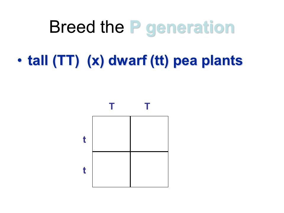 P generation Breed the P generation tall (TT) (x) dwarf (tt) pea plantstall (TT) (x) dwarf (tt) pea plants t t TT