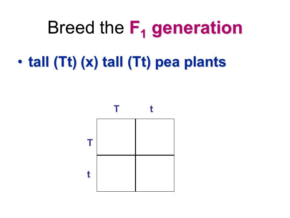 F 1 generation Breed the F 1 generation tall (Tt) (x) tall (Tt) pea plantstall (Tt) (x) tall (Tt) pea plants T t Tt