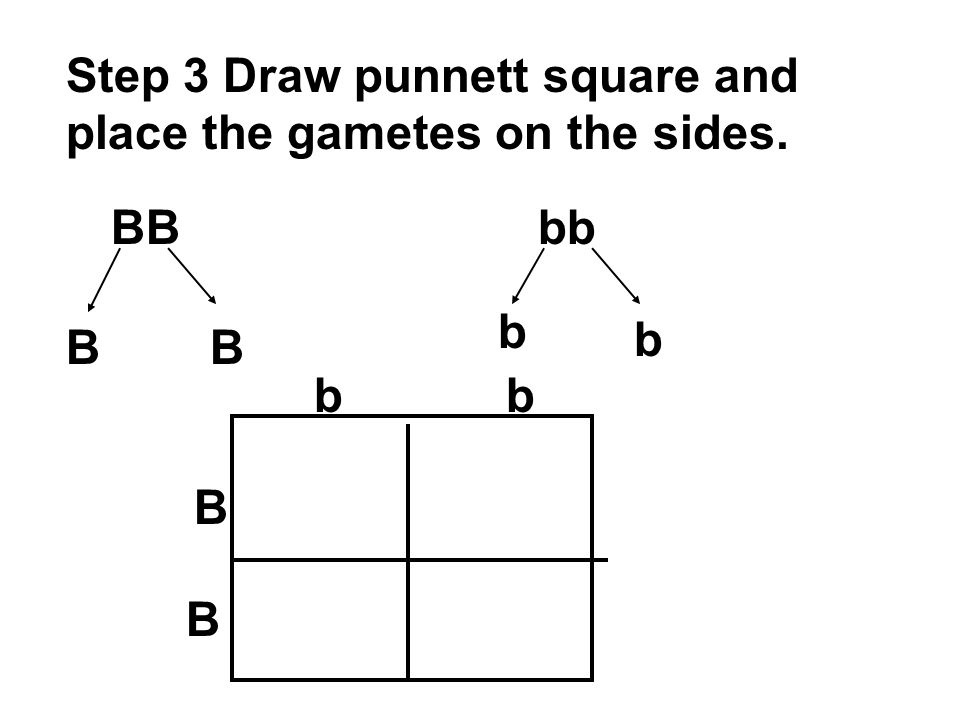 Step 3 Draw punnett square and place the gametes on the sides. BBbb BB b b B B bb