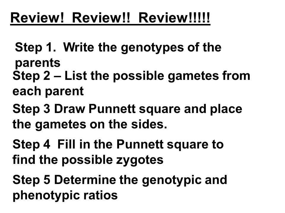 Review! Review!! Review!!!!! Step 5 Determine the genotypic and phenotypic ratios Step 4 Fill in the Punnett square to find the possible zygotes Step